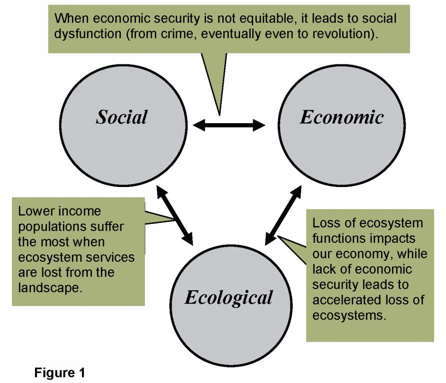 Dissertation consultation services ecosystem